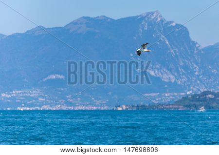 flying seagull on a background of mountainous island