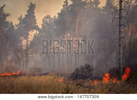 Forest fire wood- burning fire and grass