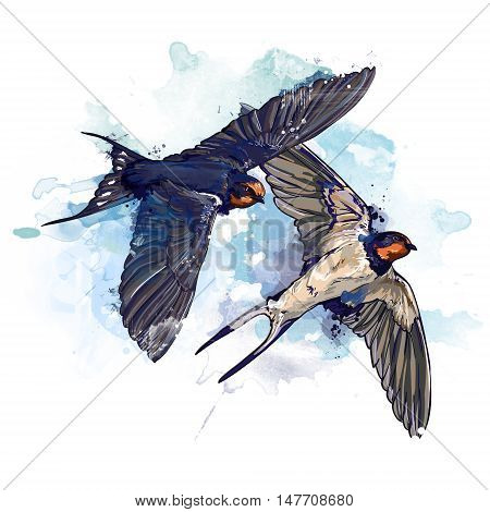 spring two birds watercolor illustration, swallows in flight picture painted in watercolor