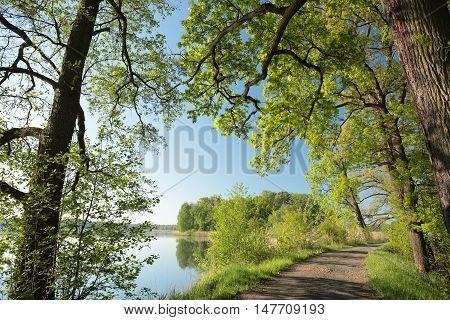 Spring landscape at dawn. May, Poland .