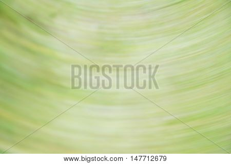 Abstract green tone background in the radial movement. Actual photography.