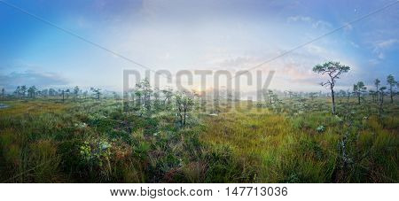 Sunrise on marsh brings fog. Misty swamp panoramic landscape