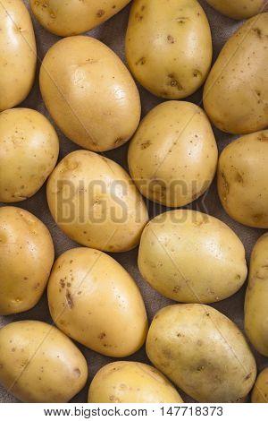 Medium size yellow potatoes background closeup shot