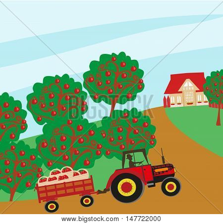 landscape with apple trees and man driving a tractor with a trailer , vector illustration