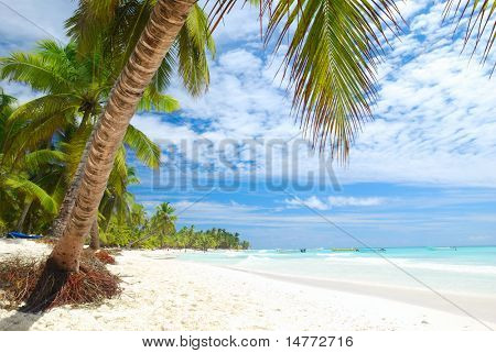 Beautiful caribbean beach in Dominican Republic