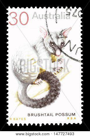 AUSTRALIA - CIRCA 1974 : Cancelled postage stamp printed by Australia, that shows Brushtail possum.