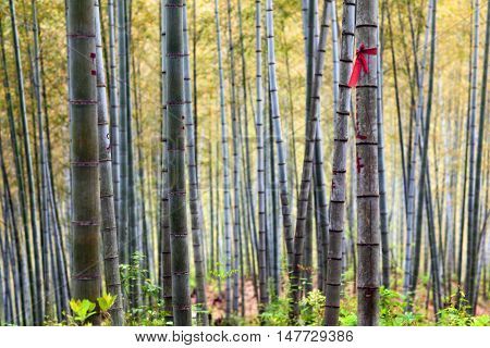 Bamboo Forest Trees