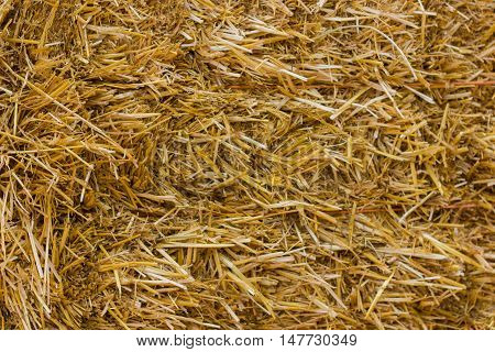 Close up of ground. Texture of straw or hay