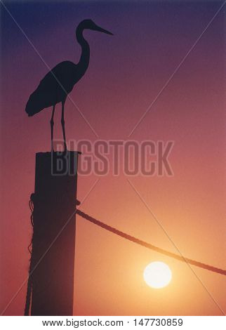 Blue Heron at Sunset with the sun low in the sky