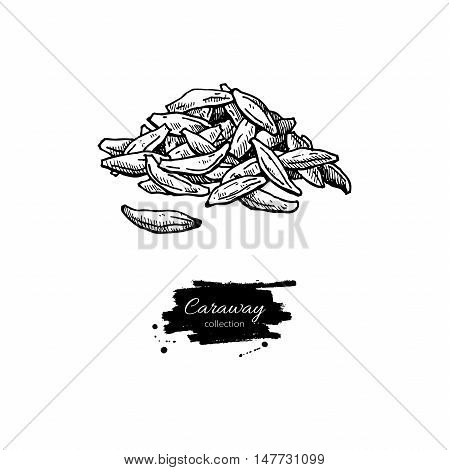 Caraway seed heap vector hand drawn illustration. Isolated spice object. Engraved style seasoning. Detailed organic product sketch. Cooking flavor ingredient. Great for label, sign, icon