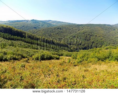 Deciduous forest landscape in mountains in wild nature during sunny day