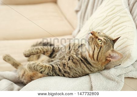 Grey tabby cat lying on knitted cushion and plaid