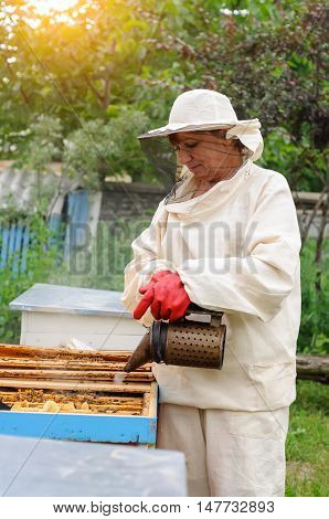 woman beekeeper looks after bees in the hive