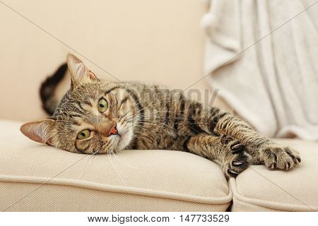 Grey tabby cat lying on beige sofa