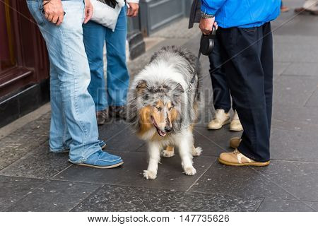 People With A Collie Dog