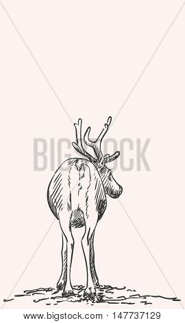 Sketch of reindeer isolated Back view Hand drawn vector illustration