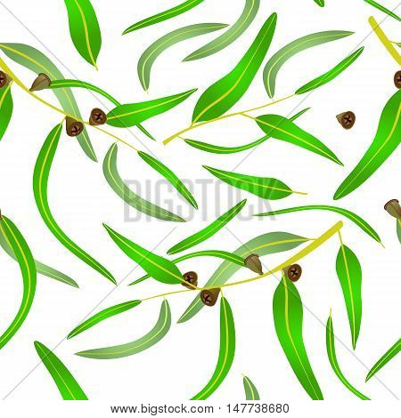 Seamless pattern with eucalyptus leaves and seeds.Vector illustration