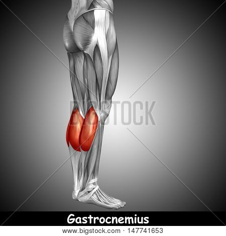 Concept or conceptual 3D illustration human lower leg anatomy or anatomical and muscle on gray background