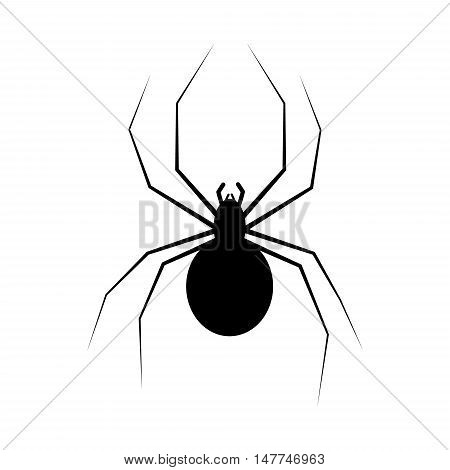 spider isolated on white could be used for your Halloween designs