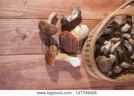 Collected mushrooms in a basket on wooden background