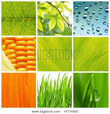 Collage made of different nature backgrounds