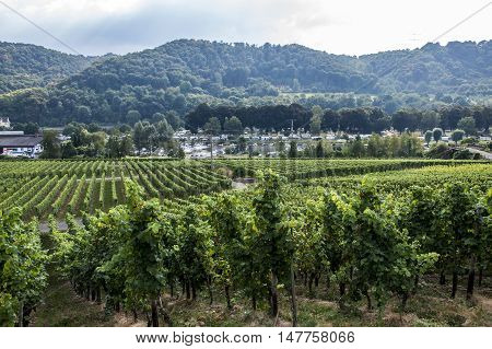 Famous German Wineyard Region Moselle River in Winningen