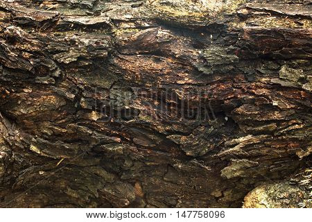 bark of tree background and texture wood