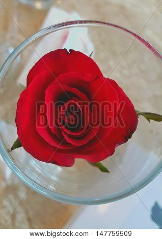 Rose in glass Red rose in glass. Rose isolated background
