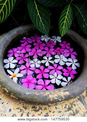Flowers in jar. Nature flowers floating in jar background