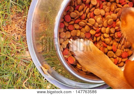 Mixed breed dog placing paw inside metal bowl of crunchy food, grassy surface, as seen from above.