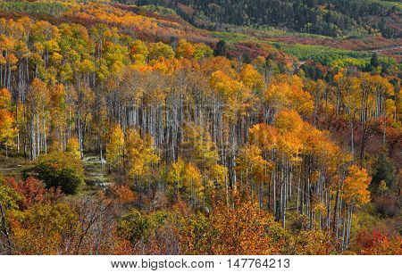 Fall foliage in Colorado rocky mountains.