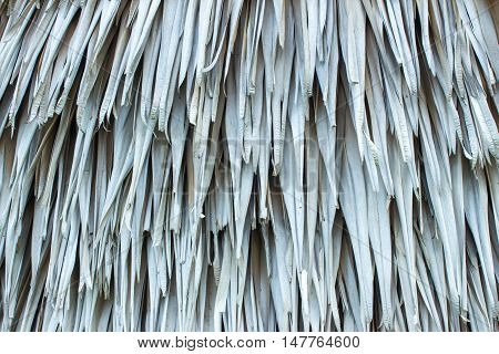 grey texture background. sugar palm leaf backdrop wallpaper