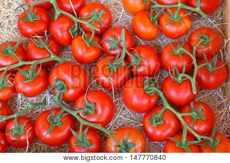 Tomato at Vine in Crate With Straw