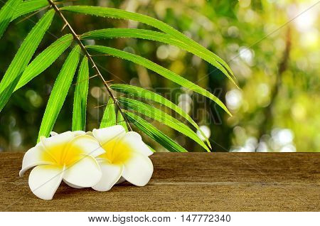 Leaf Of Wild Rattans Found In Rain Forest Whith White And Yellow Plumeria Flower On Old Wood Table.