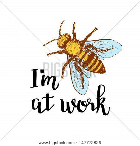 Bee with letters. Phrase I am at work. Brown and orange graphic doodle design for mug. Colored sketch. Vector illustration.