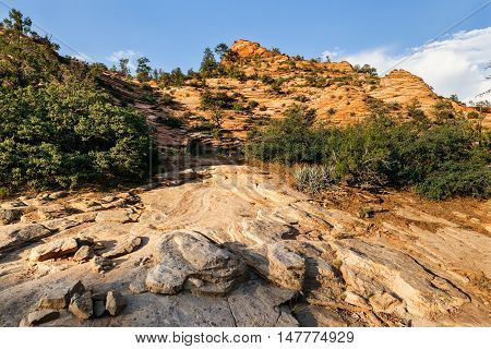 View on the sandstone hill in Zion National Park Utah