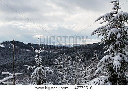Skiers and snowboarders enjoying on slopes of ski resort Bukovel Ukraine.
