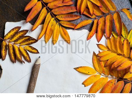 Autumn frame with leaves and old paper. Autumnal orange viburnum leaves craft paper and wooden pencil