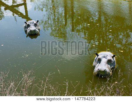 Mechelen, Belgium - 17 May 2016: Hippos Figures In Water In Planckendael Zoo.