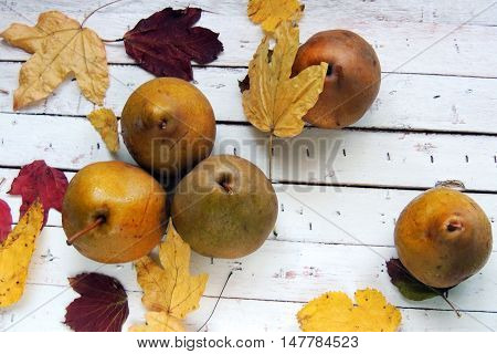 Pear And Autumn Leaves