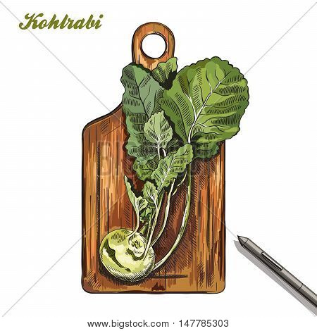 kohlrabi on a cutting board. harvesting. colored illustration made by hand on a white background.