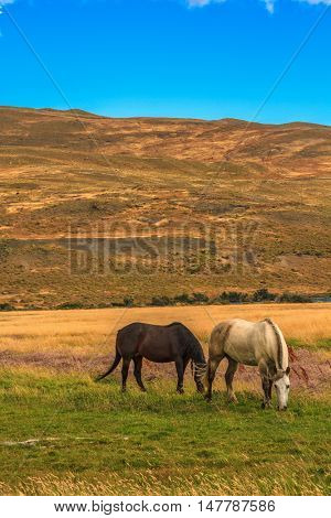 Magic light of sunset. Two horses grazing on pasture yellowed autumn
