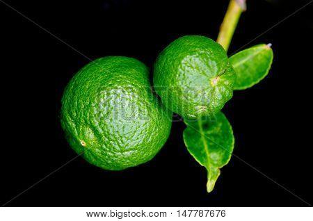 Bergamot Orange Hanging Fruits With Leaf Isolated On Black Background