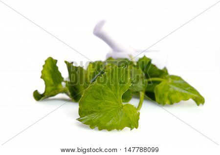 Centella Asiatica Or Thankuni In Indian, Buabok Leaf In Thailand With Mortar Isolated On White