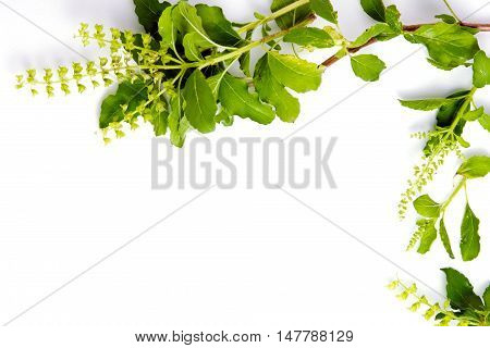 Basil Leaf Border On White Background For Decorative Graphic Resource