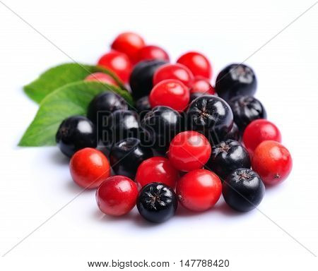 Black chokeberry and viburnum. Autumn berries .
