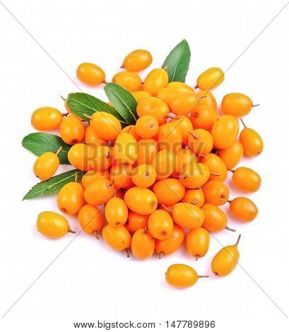 Sea buckthorn berries on a white background