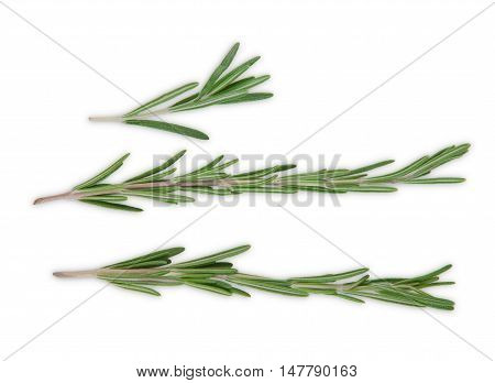 Rosemary herb closeup isolated on white background. Studio image of spicy vegetable and herb, healthy natural organic food, cooking ingredient