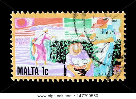 MALTA - CIRCA 1981 : Cancelled postage stamp printed by Malta, that shows Growing cotton.