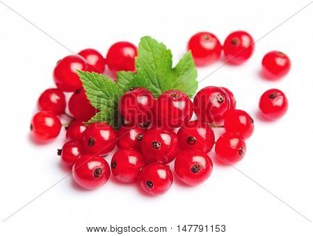 Currant berry close up isolated on white